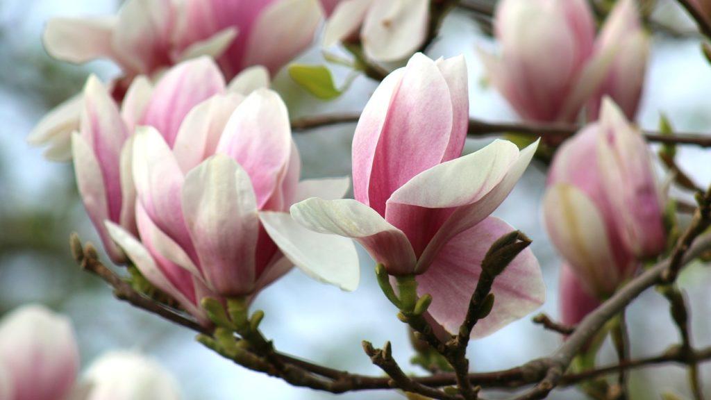 Fleur - Femmes en devenir - psychotérapeute Narbonne